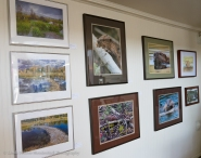 Beaver habitat and beaver fine art photos