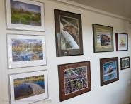 Beaver habitat and beaver fine art photos